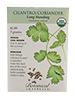 Cilantro/Coriander Organic